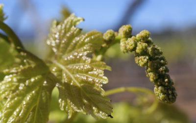 Bearing fruit for the true vine